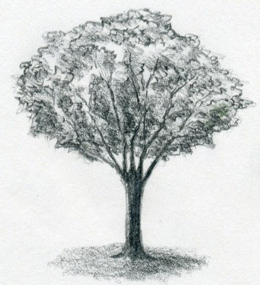 jak narysować drzewo ołówkiem