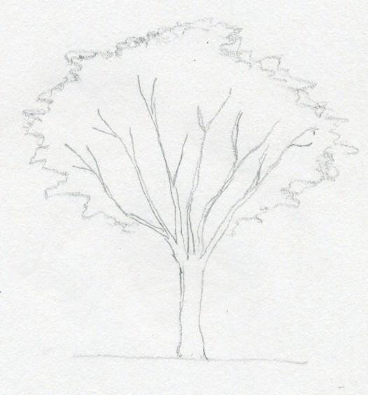 jak nauczyć sie rysować drzewo ołówkiem