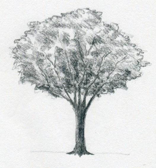 nauka-rysunku drzewa ołówkiem
