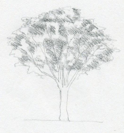 nauka-rysunku rysować drzewo ołówkiem