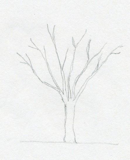 się rysuje drzewo ołówkiem