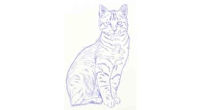 Jak narysować kota prostym ołówkiem