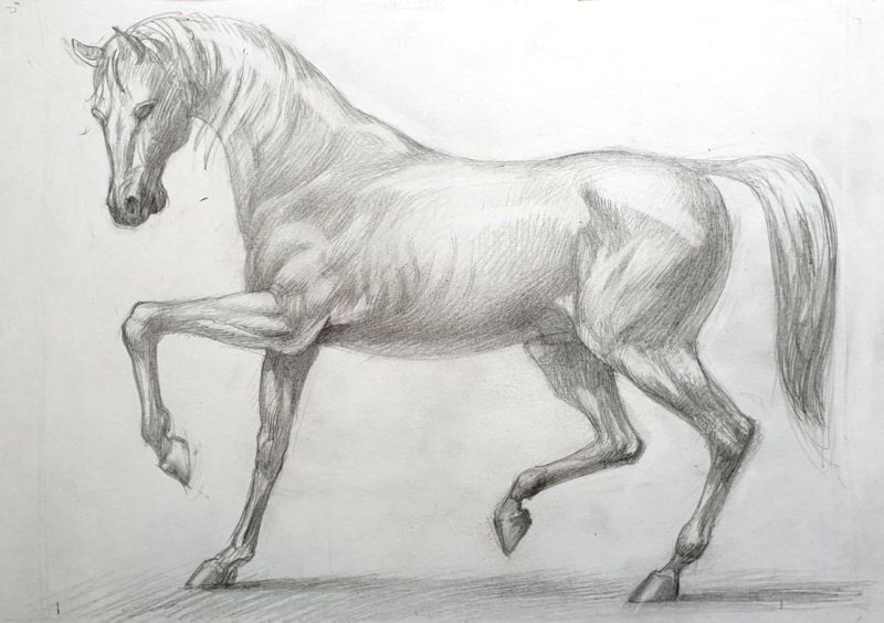 rysunek konia- Alexander Zastanchenko ARTAKADEMIA
