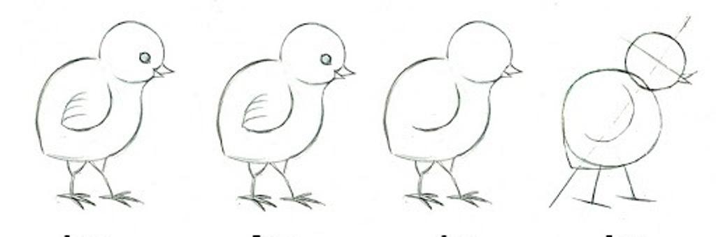 jak narysować kurczaka (1)