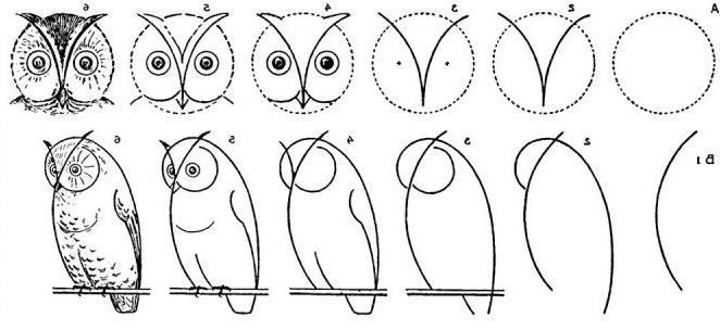 Jak narysować sowę krok po kroku