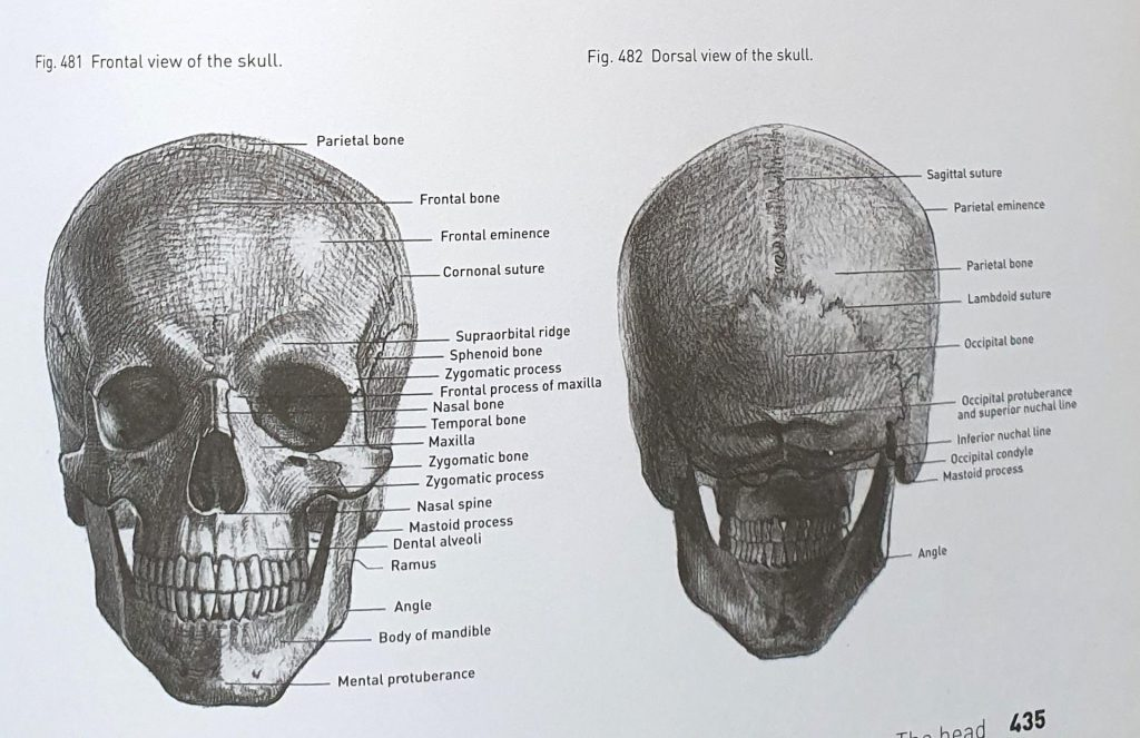 jak narysować czaszkę ołówkiem